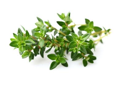 درمان سرفه با گیاهی که معجزه میکند