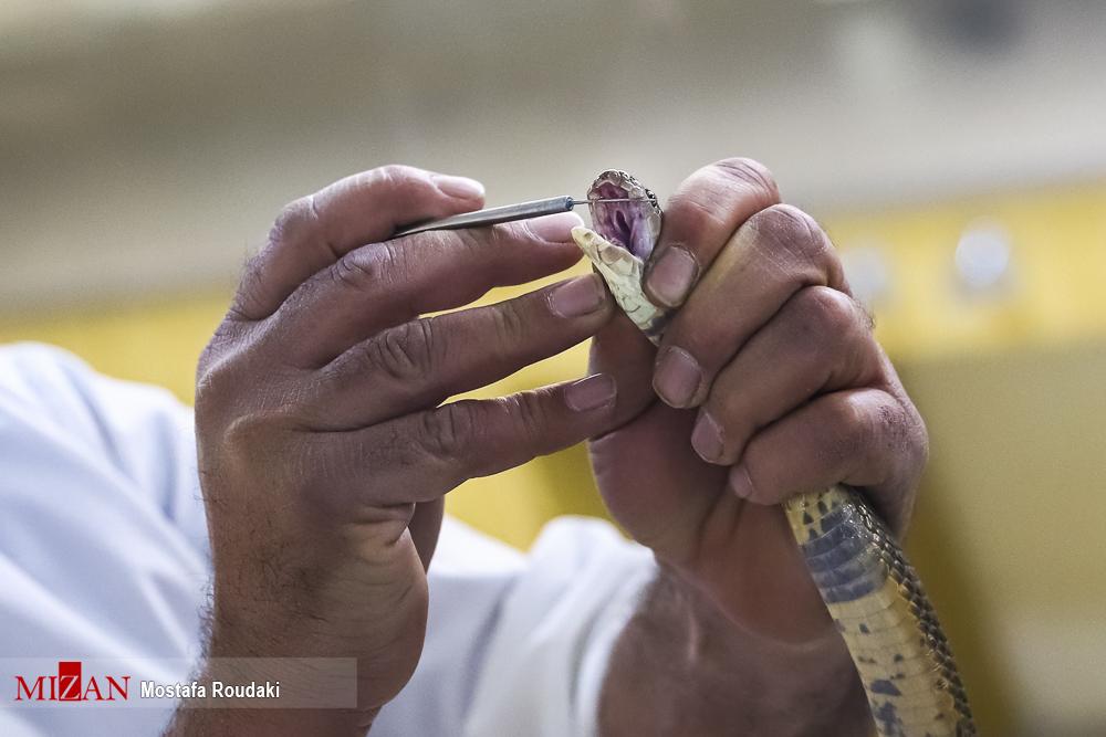 عکس/ شرکت های فعال واکسن سازی ایران