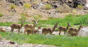 ممنوعیت ورود به مناطق حفاظتشده همدان تا پایان خرداد