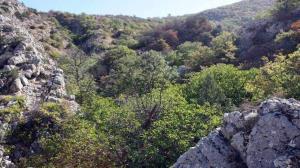 افزوده شدن ۳ منطقه حفاظت شده به مجموعه ذخیرهگاه زیست کره گلستان