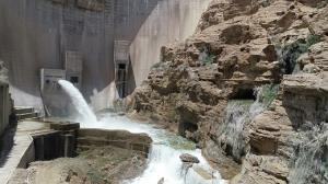 آب سد رئیسعلی در نخلستانهای دشتستان جاری شد