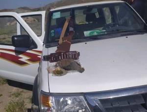 متخلفان شکار غیر قانونی پرندگان وحشی در جنوب کرمان دستگیر شدند