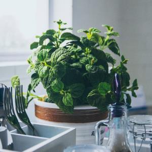 ترفند جالب برای نگهداری نعناع تازه در خانه