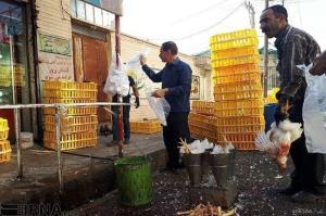 کشف ۹ تن مرغ زنده قاچاق در اردکان