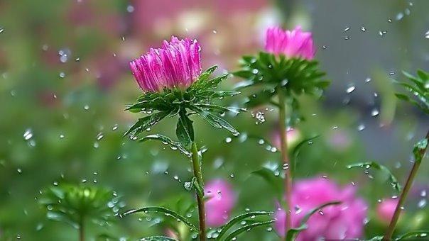 تداوم باران بهاری در گیلان