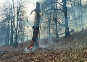 پایش تمامی جنگل های هیرکانی مازندران تا پایان سال