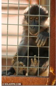 میمون انگشت یک پسر بچه 5 ساله را کند!
