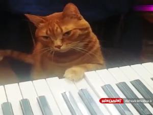 پیانو زدن گربه رو دیده بودین؟
