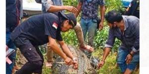 تمساح 8 متری پسربچه را بلعید