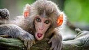 میمون انگشت یک بچه را کند