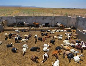 خسارت خشکسالی به ۸۰ درصد مراتع عشایر خراسان جنوبی