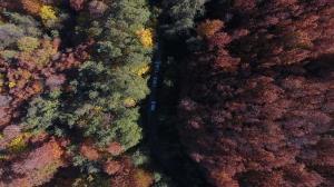 رصد هوایی جنگلهای هیرکانی آغاز شد