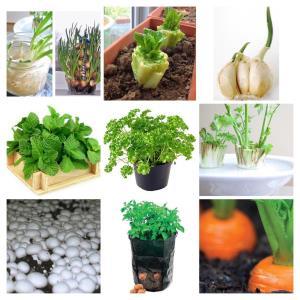 روشهای عالی برای کاشت سبزی های ارگانیک در خانه