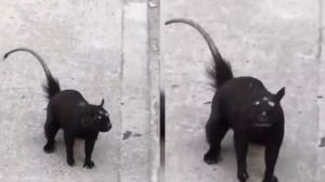 رویت یک جانور عجیب الخلقه در خیابان!