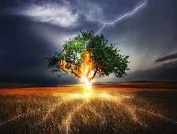 قدرت عجیب رعد و برق در پودر کردن یک درخت بزرگ!