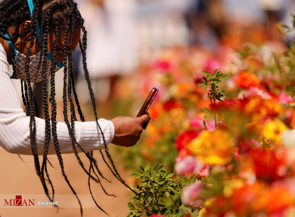 دشت گل های رانونکلوس