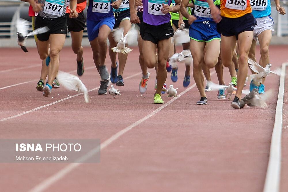 عکس/ کبوترهای دردسرساز در مسابقات ورزشگاه امام رضا(ع)