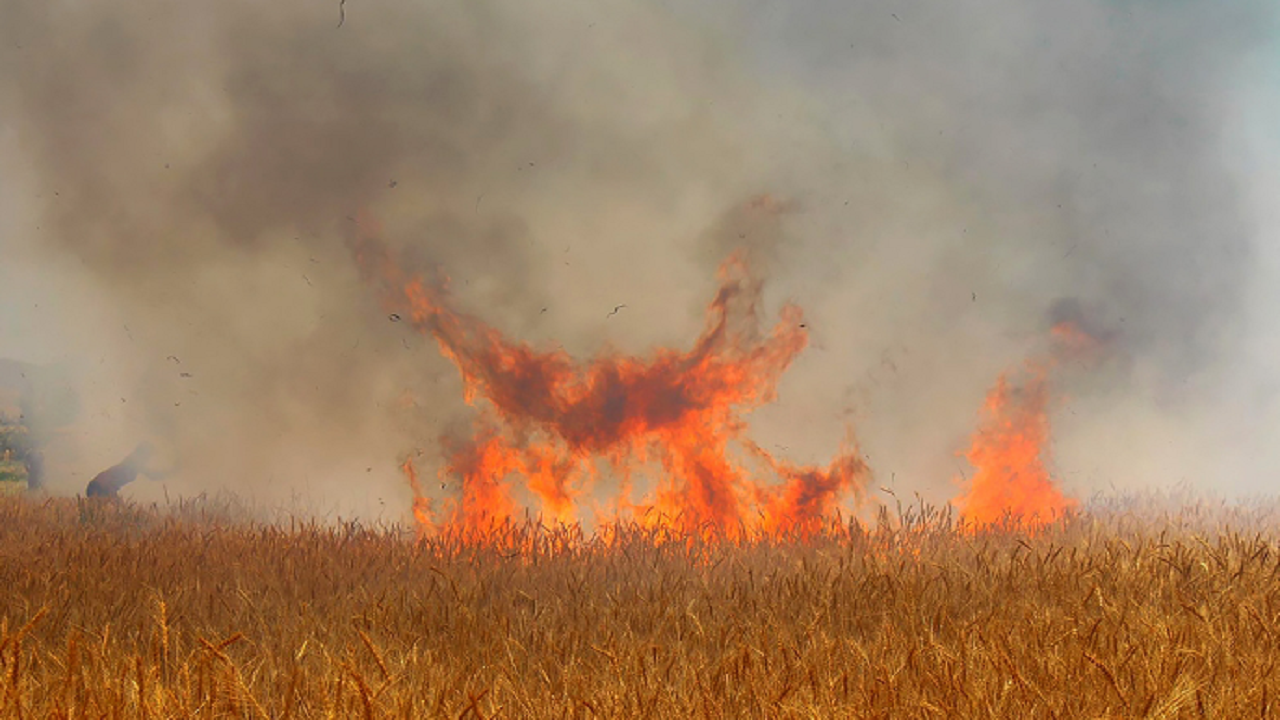 آتشسوزی گندمزار در وحدتیه تکذیب شد