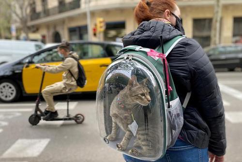 حمل عجیب گربه خانگی در بارسلونا