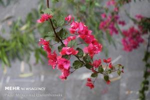 بارشهای بهاری نواحی غرب، جنوب و شرق اصفهان را فرا میگیرد
