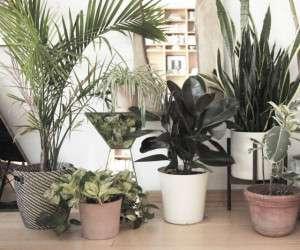 فواید باورنکردنی نگه داری گل و گیاه در خانه