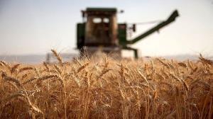 قیمت خرید گندم در لرستان اعلام شد