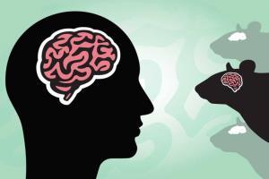 آیا پیوند سلولهای مغز انسان به مغز حیوانات منع اخلاقی دارد؟