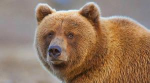 حضور جالب یک خرس در خانه ای در کالیفرنیا