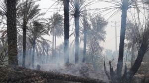 مهار آتش سوزی در نخلستانهای دهستان سیاهو پس از ۱۴ ساعت تلاش