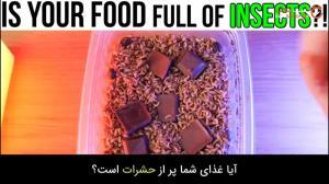 آیا می دانستید غذاها پر از حشرات هستند؟