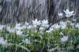 نوید باران بهاری در چهارمحالوبختیاری