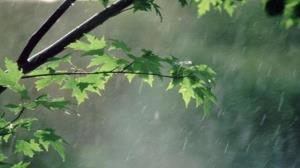 بارشهای ملایم بهاری تا جمعه در گلستان ادامه دارد