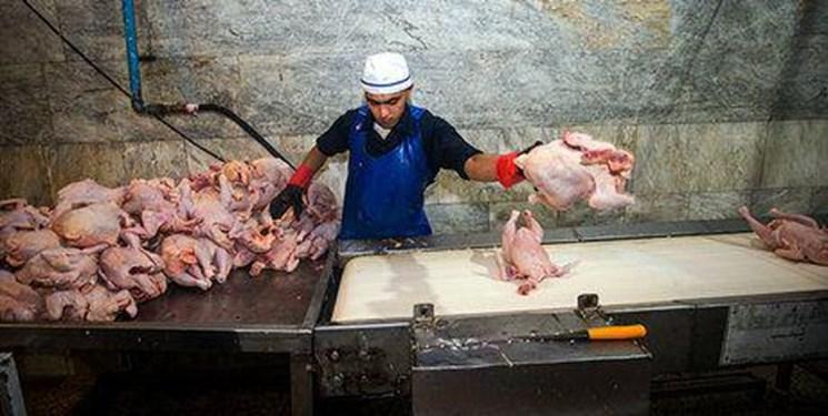 عرضه ناچیز مرغ در بازار بوشهر؛ مرغ فروشان: دولت به تعهداتش عمل نکرد