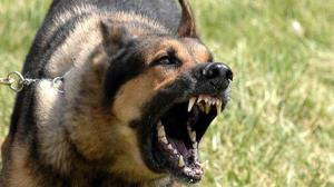 نجات یک مرد از حمله سگهای نگهبان باغ در فردیس