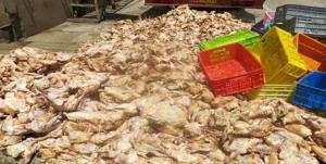 حکم جالب یک مقام قضایی برای عرضهکننده مرغ غیرقابل مصرف
