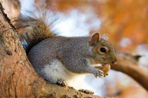 رهاسازی سنجاب در دامان طبیعت فسا