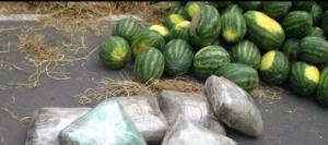 کشف ۷۲ کیلوگرم مواد مخدر در بار هندوانه