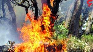 درخت گردوی ۸۰۰ ساله در لرستان به آتش کشیده شد