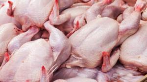کشف ۲ تن مرغ گرم در لامرد