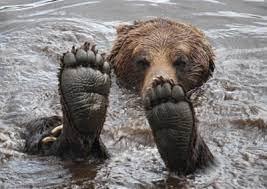 خرسی که عادت کرده هر روز در وان آب گرم آب تنی کند!