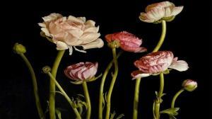 گلهایی که شاهکارهای گران قیمت شدند