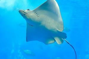 کمک متخصصان به سفره ماهی مادر