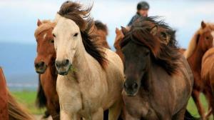 ایجاد ترافیک در خیابان به خاطر دو اسب