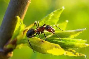 نوعی مورچه برای تبدیل شدن به ملکه، مغز خود را کوچک میکند