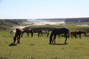 جشنواره ملی زیبایی اسب ترکمن در کلاله برگزار میشود