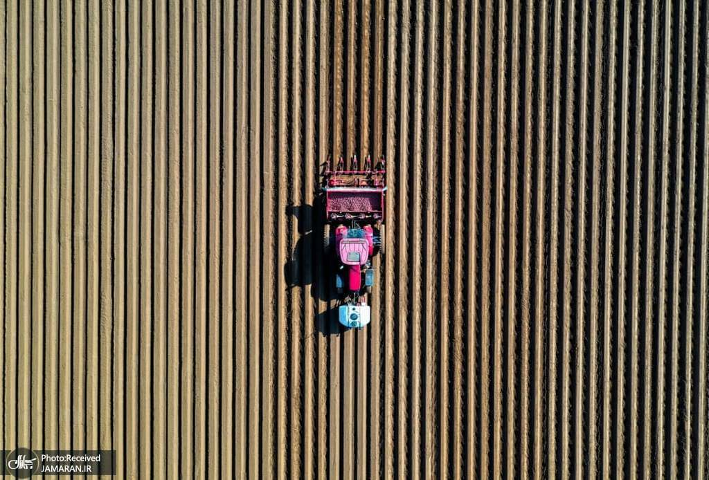 نمایی هوایی از زمین کاشت سیب زمینی