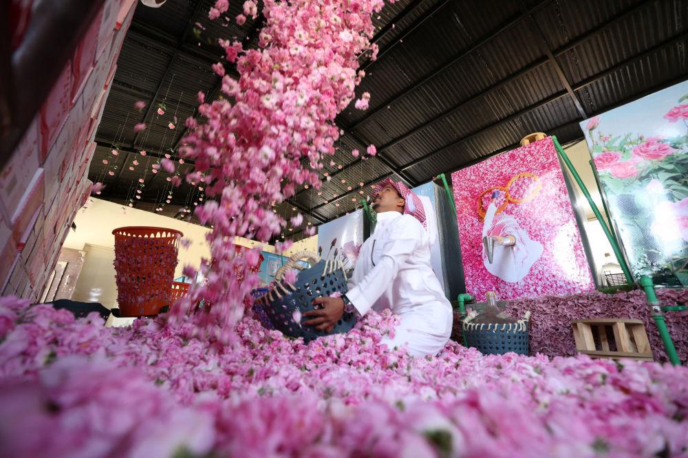 برداشت گل سرخ در عربستان