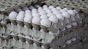 اجباری شدن عرضه تخم مرغ بسته بندی به ماه های بعد موکول شد