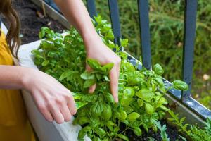 اصول پرورش سبزی خوردن در خانه