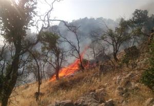 هشدار آتشسوزی در عرصههای جنگلی گلستان صادر شد